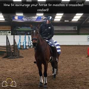 how to maintain a consistent contact with your horse