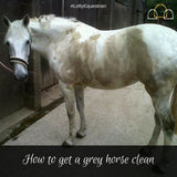 How to get a grey horse clean