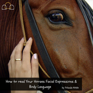 Read Your Horses Body Language