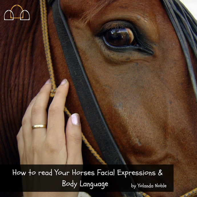 How to Read Your Horses Facial Expressions & Body Language