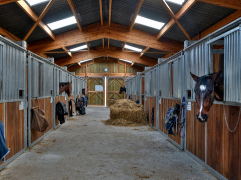 Horses in stabled conditions