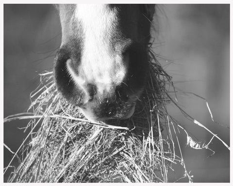Feeding hay from the floor can be beneficial for your horses back