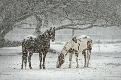 horses outside in snow