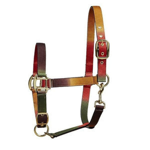 multi coloured headcollar