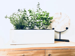 The Three Co | Easy Care | Planters