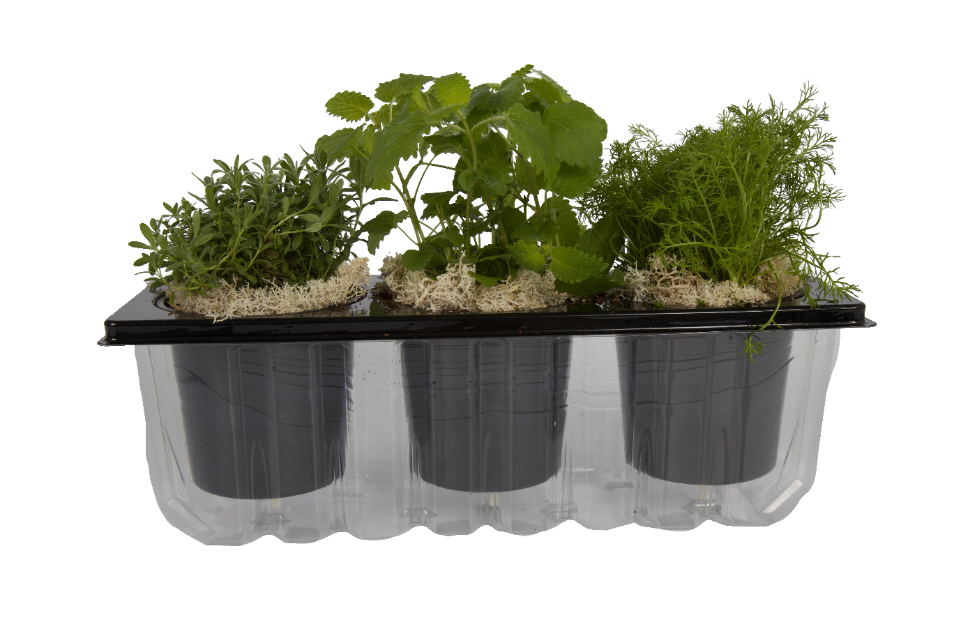 The Three Co | LiveBox | Self-watering planter