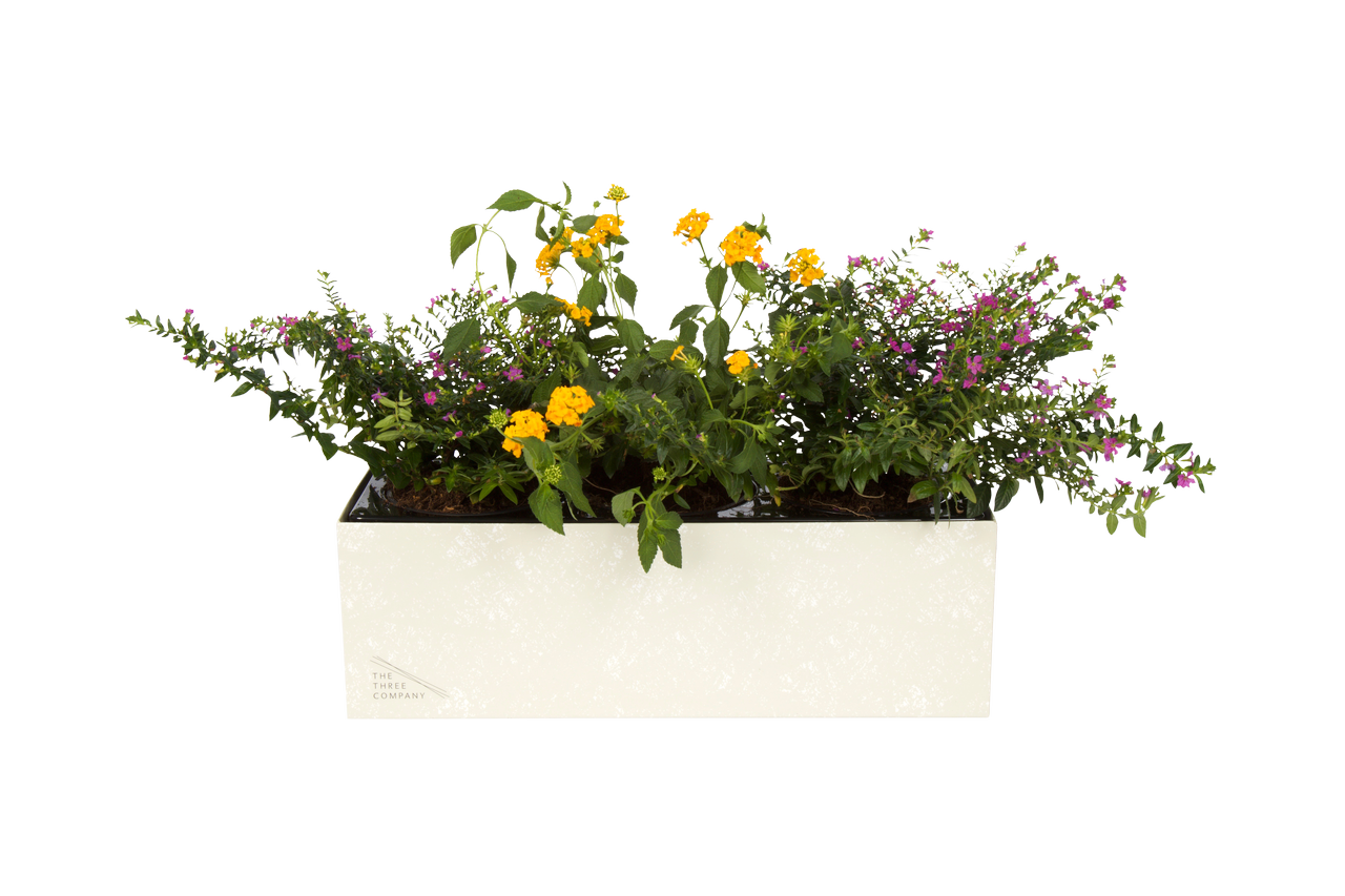 liveBox with flowers | The Three Co.