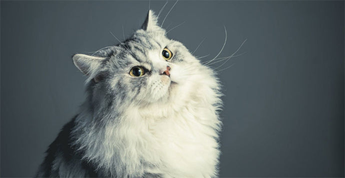 Leveling Up Cat Grooming: Choosing the Best Trimmers for Long-haired Cats