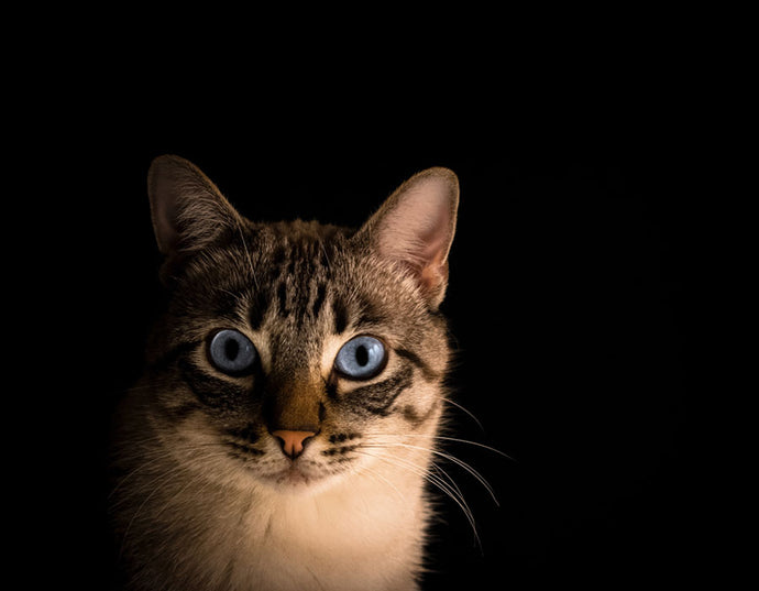 Cats and Their Superpowers: Can They Really See in Total Darkness?