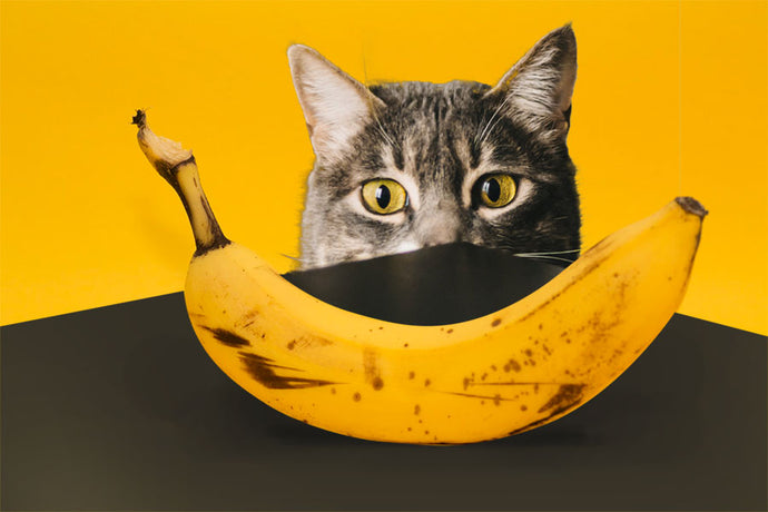 Do Cats Like Bananas and Should They be on Their Menu?