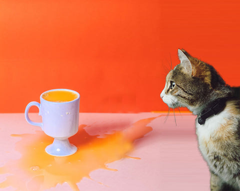 Can Cats Drink Orange Juice? Here's Everything You Need to Know