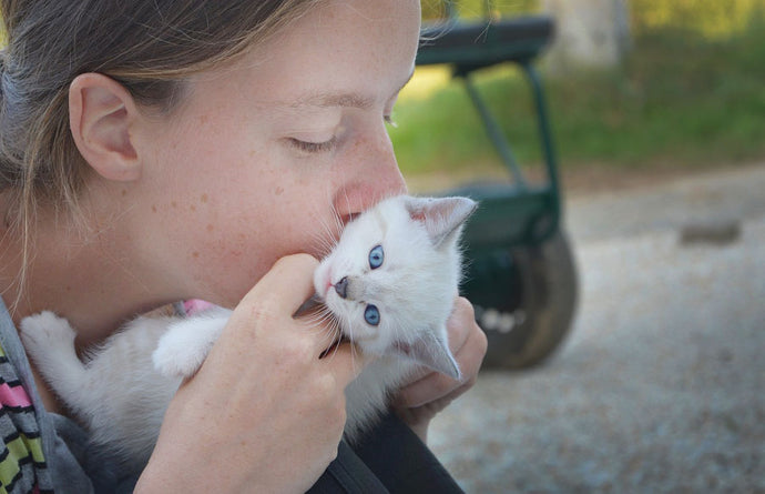 Understanding Cats: What do cats think when we kiss them?