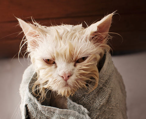 how often should you wash your indoor cat