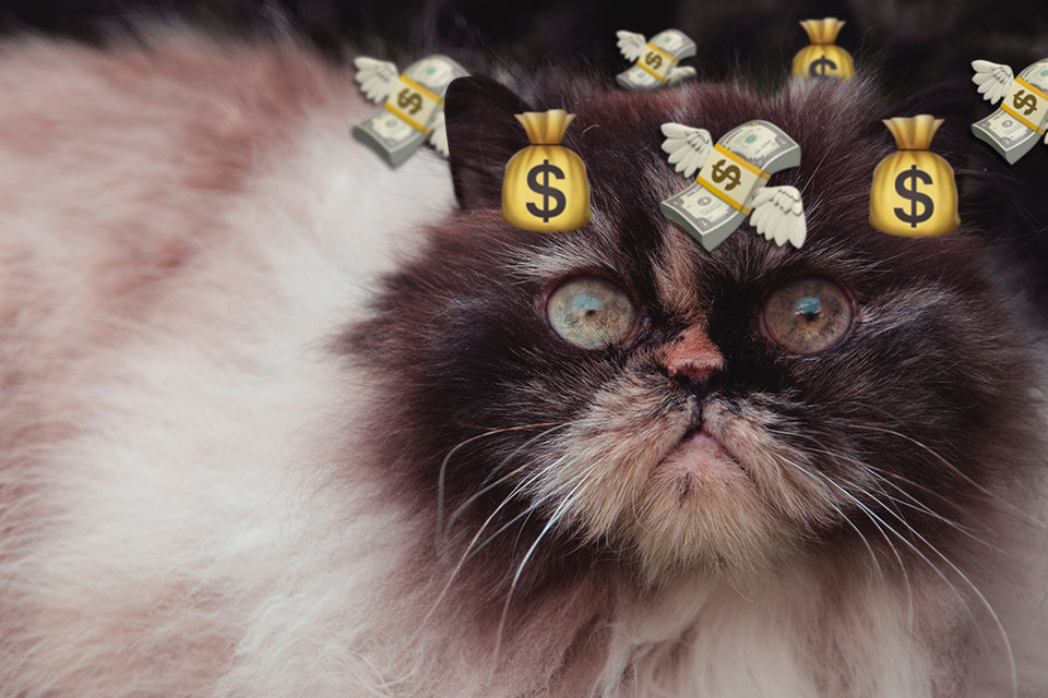 how much does a cat cost per year