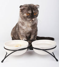 Double White Ceramic Bowls for Cats
