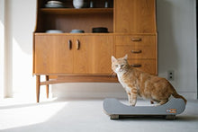 Interactive Cardboard Cat Scratcher