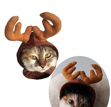 Buckhorn Cat Hat for Halloween and Christmas