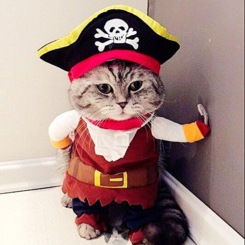 Funny Pirate Corsair Dressing for Cat