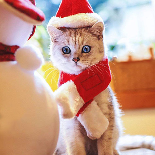 Cat Santa Costume With Hat for ChristmasBrightly Colored Cat Santa Costume With Hat for Christmas