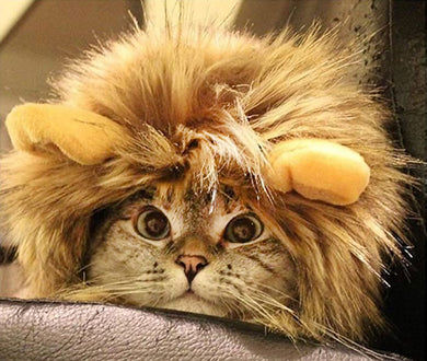 Lion Mane Cat Costume by OMG Adorables, Furry Wig with Cute Ears