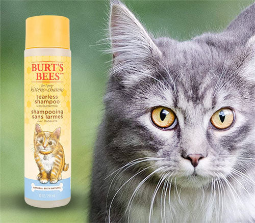 Tearless Kitten Shampoo with Buttermilk by Burt's Bees