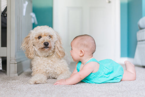 baby laying down on carpet next to a dog and smiling