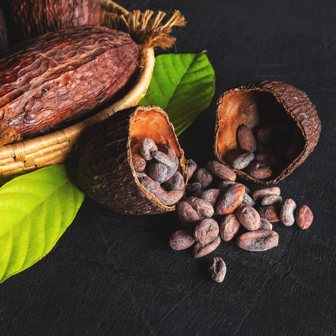 Plant - Top 10 Cacao Facts