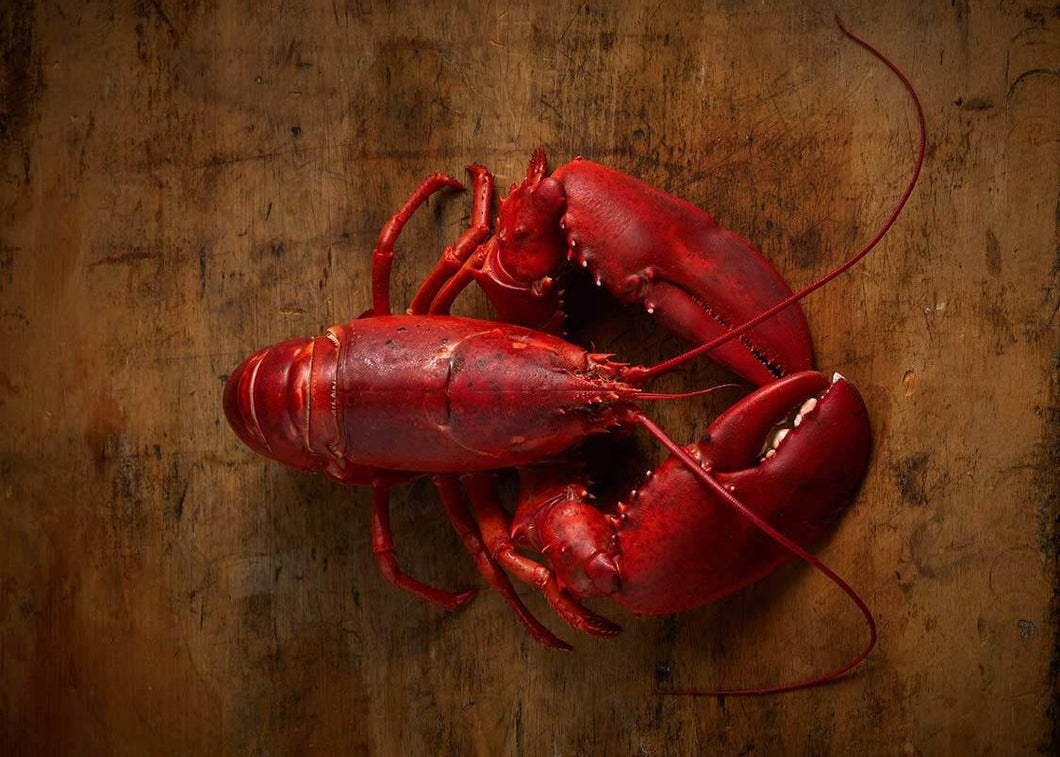 Live Lobster | Get Delivered Fresh | Constitution Seafoods - Boston, MA