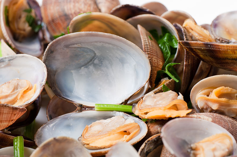 Live Littleneck Clams | Constitution Seafoods - Boston, MA