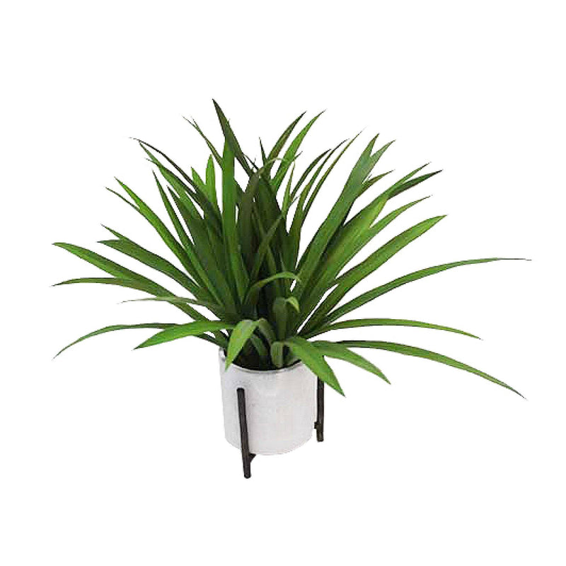 Grass Plant in Ceramic Pot with Metal Stand White - Magasins Hart | Hart Stores