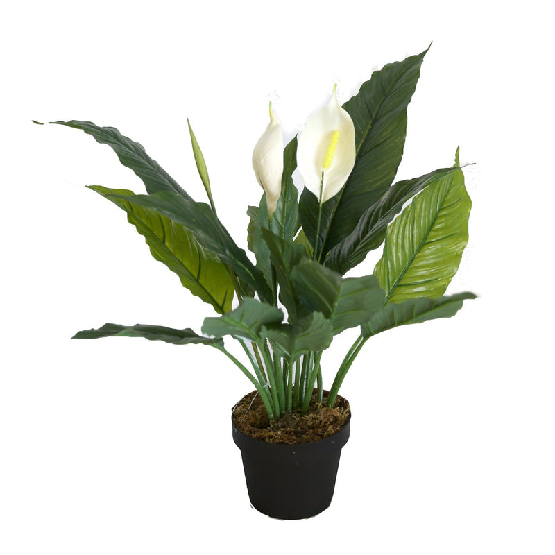 Spathiphylium Patinii Artificial Plant - Magasins Hart | Hart Stores