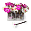 Orchid Ballpoint Pen Display (includes acrylic display holder) Black Ink, Pink and White Colors, 24 pens/display