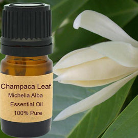 Champaca Leaf Essential Oil