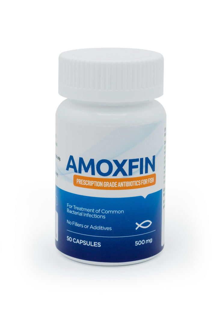 AmoxFin 500mg - 50 Count - FishPharm.com
