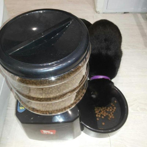 Image of Kitty Self-Activating Feeder - Cute Cats Store