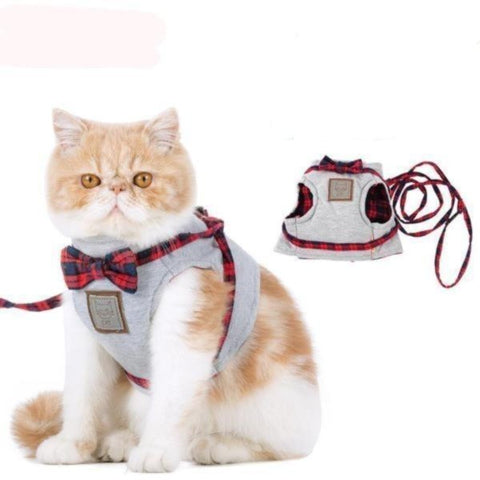 Walking Cat Jacket - Cute Cats Store