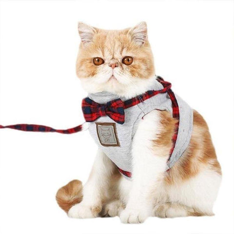 Image of Cat Vest Harness - Cute Cats Store