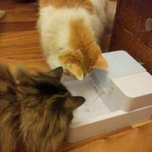 cat drinking fountain - Cute Cats Store