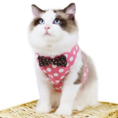 cat harness and leash - Cute Cats Store