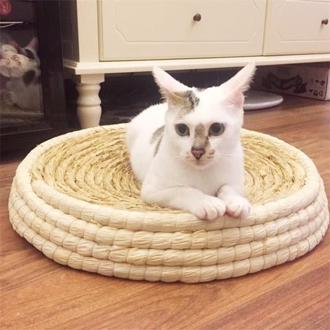 Image of cat summer bed - Cute Cats Store
