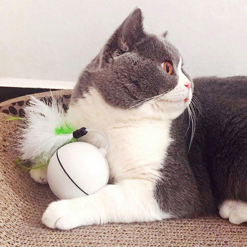 Image of cat ball toy - Cute Cats Store