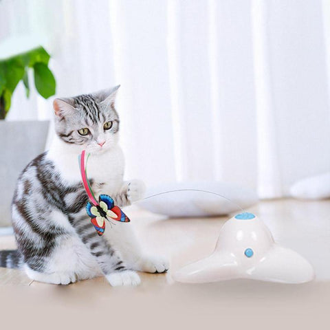 Image of Funny Cat Toy - Cute Cats Store