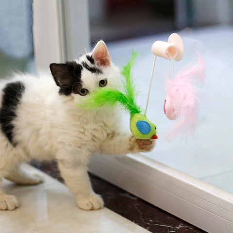 Image of Window Cat Toy - Cute Cats Store