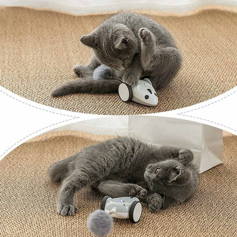 mouse motion cat toy - Cute Cats Store