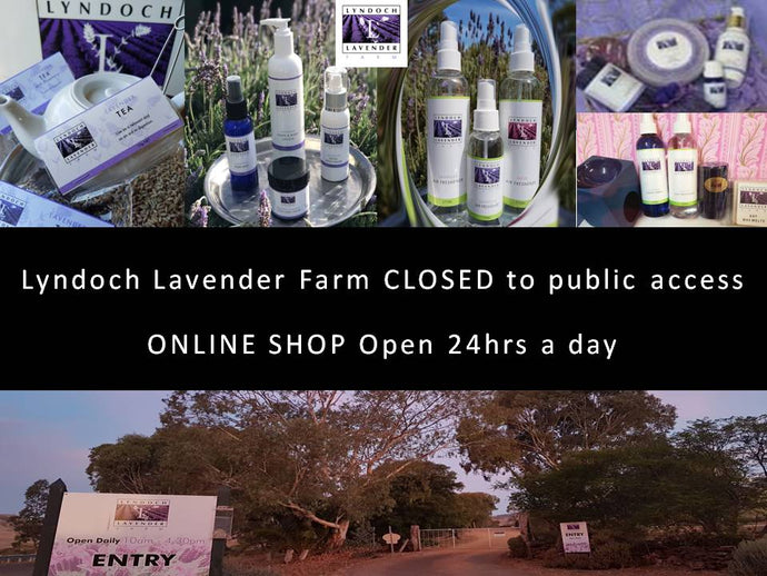 Our Farm Gates are closed as of today but the Online Shop isn't - shop at Lyndoch Lavender Farm