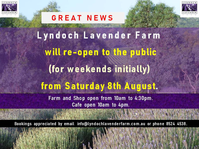 Lyndoch Lavender Farm & Cafe is re-opening its farm gates to the public