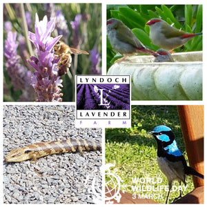 World Wildlife Day - Lyndoch Lavender Farm
