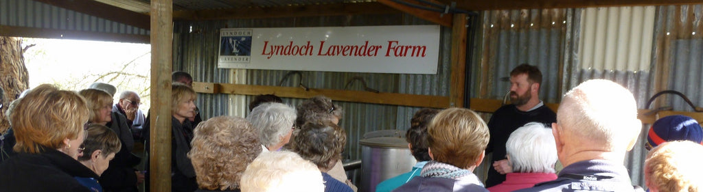 tours at Lyndoch Lavender Farm