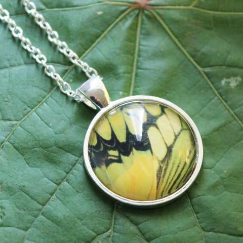 King Swallowtail Butterfly Pendant Necklace, Butterfly Wing Necklace, Thoas Swallowtail Necklace, Picture Pendant with Butterfly, Entomology