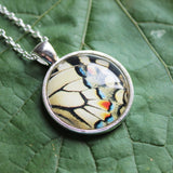Old World Swallowtail Wing, Butterfly Wing Pendant Necklace, Papilio Machaon, Butterfly Wing Necklace, Picture Pendant, Entomology Necklace